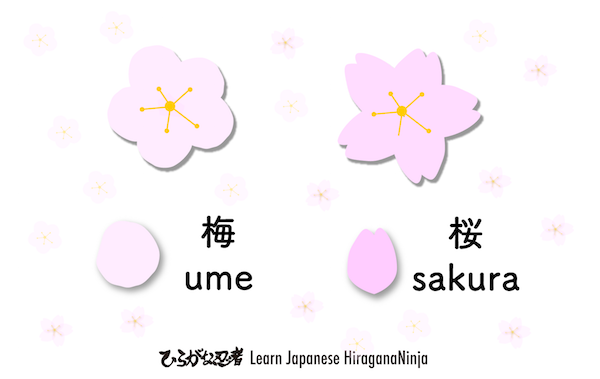 diffs-sakura-ume